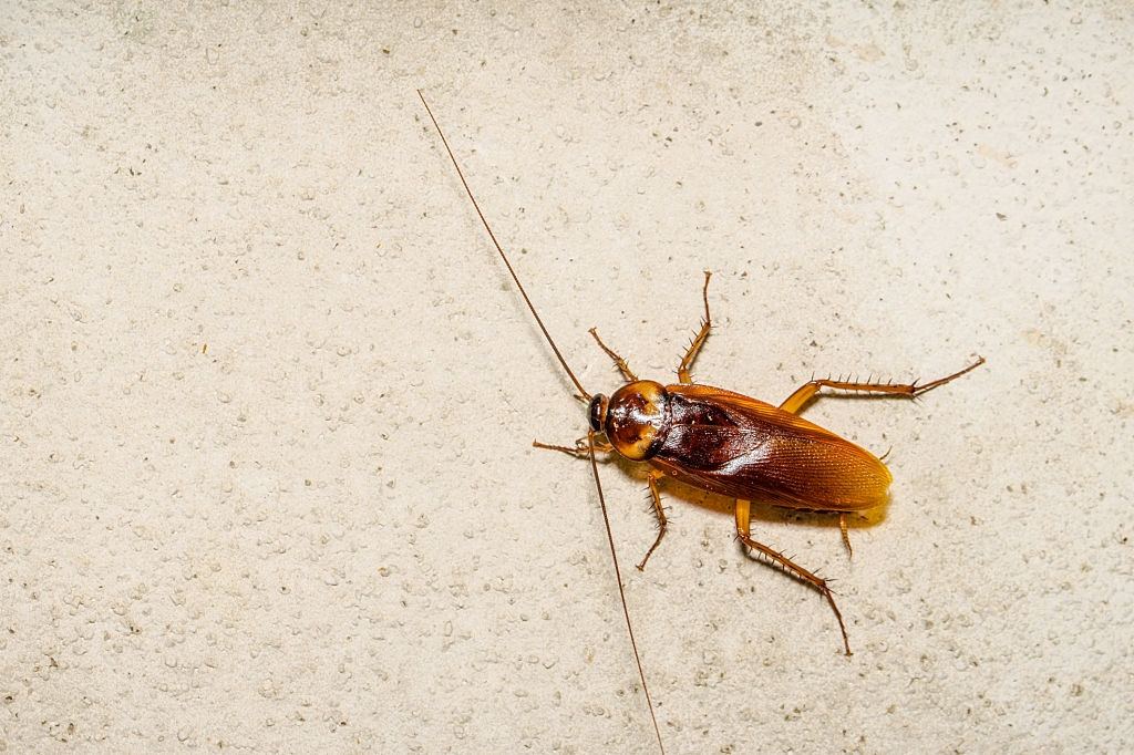 Cockroach Control, Pest Control in Yeading, UB4. Call Now 020 8166 9746