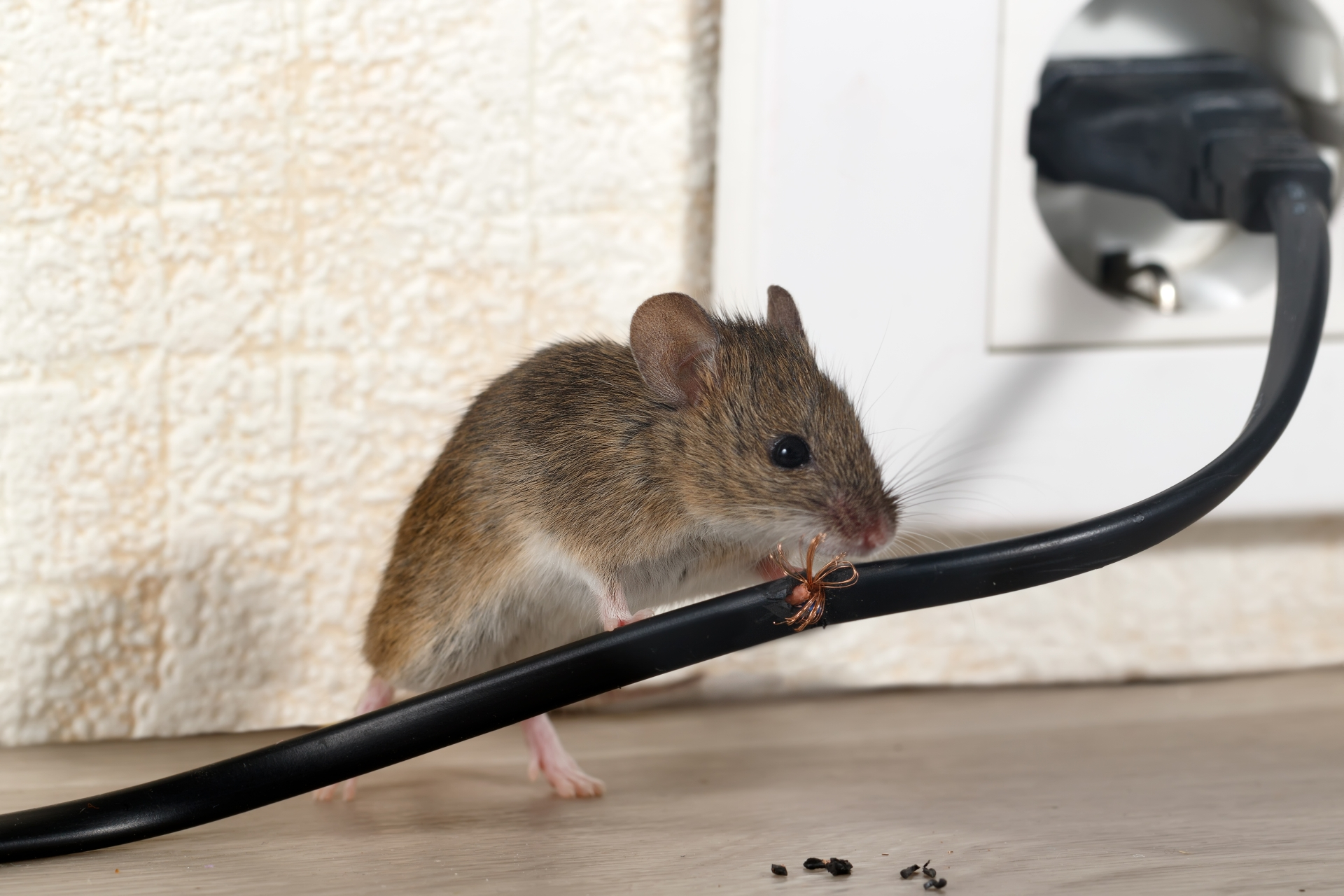 Mice Infestation, Pest Control in Yeading, UB4. Call Now 020 8166 9746